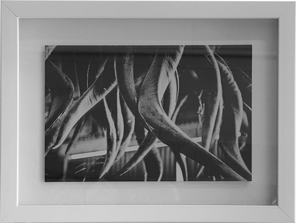 Black & white photograph: close-up of hunting trophies. Box-framed, plain white frame. Recommended to be part 1 of a set of 3.